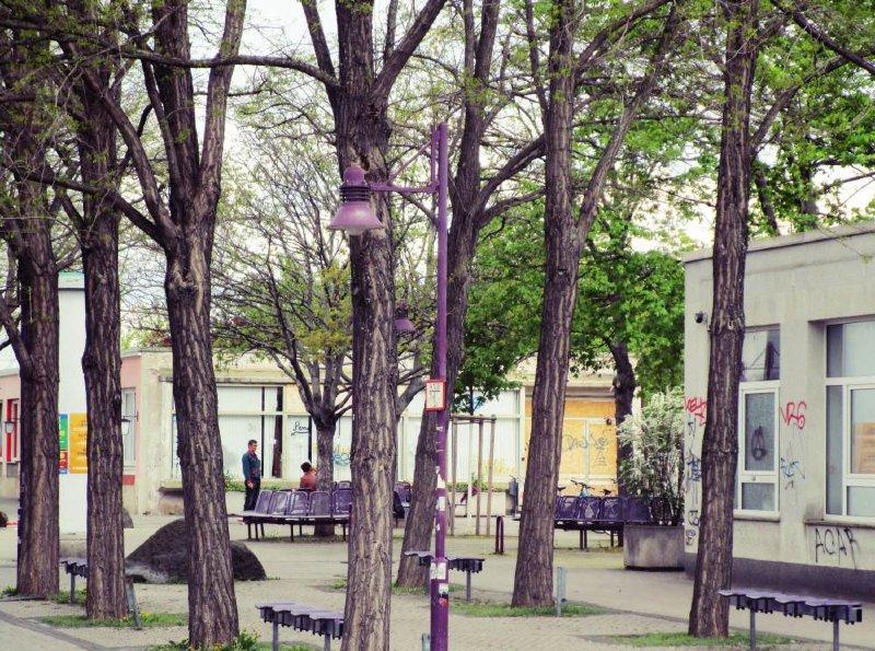 Ein Traum in lila. Erfurt, Johannesplatz. Foto: Franziska Wilhelm
